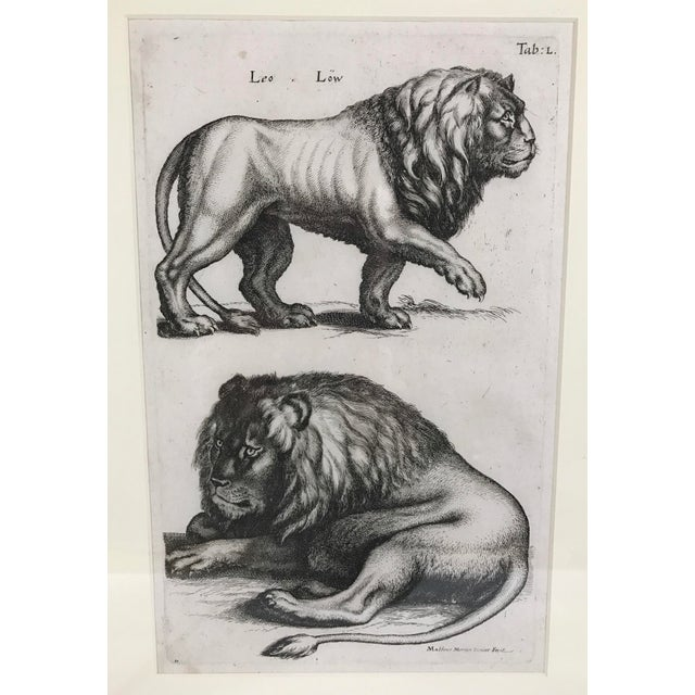 Traditional Matthäus Merian Lion Etching Print For Sale - Image 3 of 4