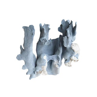 Large Natural Ocean Sea Blue Coral Specimen