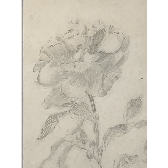 Antique Drawing of a Flower by Charles Sheldon For Sale - Image 4 of 6