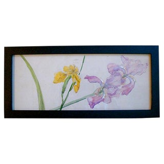 Spring Iris Bloom Watercolor Painting