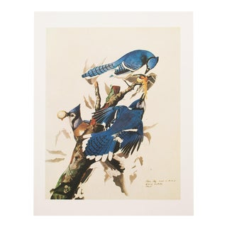 1960s Vintage James Audubon Blue Jay Reproduction Lithograph Print For Sale