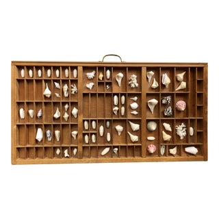 Antique Typography Drawer With Shell Collection For Sale