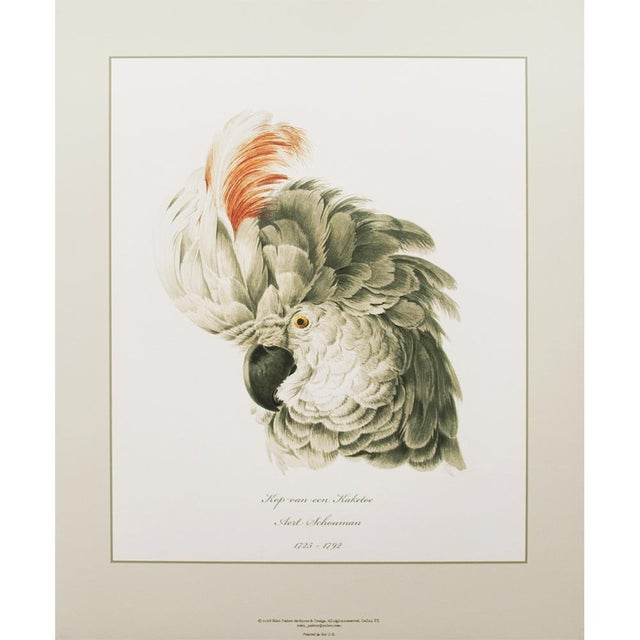 American Classical Large 16-18th C. Parrot Head Study Prints - Set of 6 For Sale - Image 3 of 10