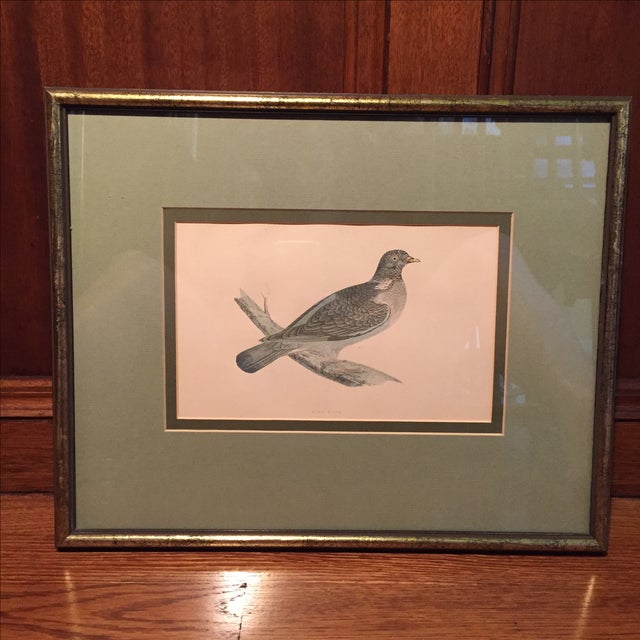 18th C. English Bird Prints in Matching Frames - Image 5 of 12