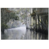 Image of Spanish Moss Draped Bayou Signed Framed Photograph For Sale