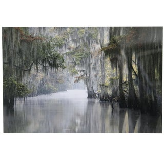 Spanish Moss Draped Bayou Signed Framed Photograph For Sale