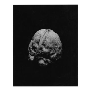 Still Life Photograph of a Walnut by Garo For Sale