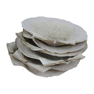 New England Large Natural Scallop Shell Seafood Servers - S/6 For Sale