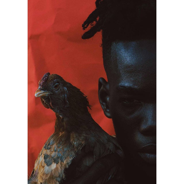 "Contemporary Photography ""Omens 2"" by Douglas Condzo OMENS / Chickens in dreams can often symbolize unusual and unexpected..."