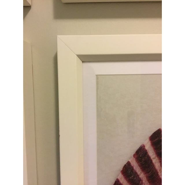 """Framed Trowbridge """"Shell"""" Giclees Photos set of six by Ben Wood, limited edition giclees on white cotton rag watercolor..."""