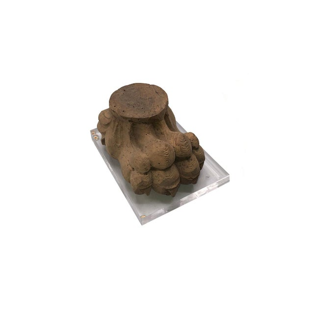 Brown Antique Mounted Paw Fragment For Sale - Image 8 of 8