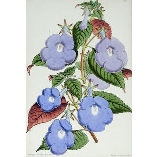 1870's Botanical Chromolithograph For Sale