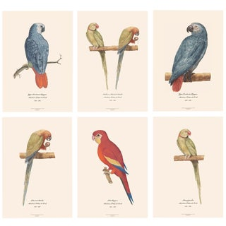 XL 1590s Contemporary Prints of Anselmus Boëtius De Boodt Parrots - Set of 6 For Sale