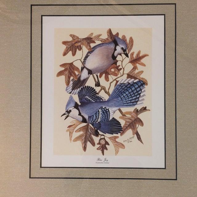 Wood Vintage Earl O Henry Bird Prints - 4 Framed Prints For Sale - Image 7 of 13