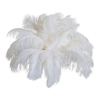 Naturally Shed White Ostrich Feathers, 25 Piece For Sale
