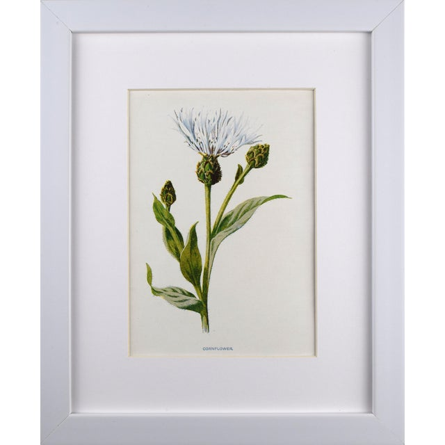 Antique English Botanical Prints by Hulme C.1900 - Set of 6 For Sale In New York - Image 6 of 13