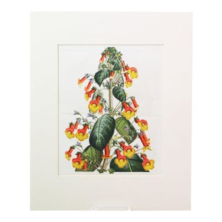 Vintage Trumpets Matted Floral Print For Sale