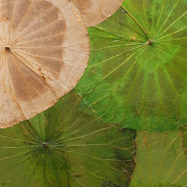 Asian Contemporary Thai Lotus Leaf Wall Hanging For Sale - Image 3 of 4