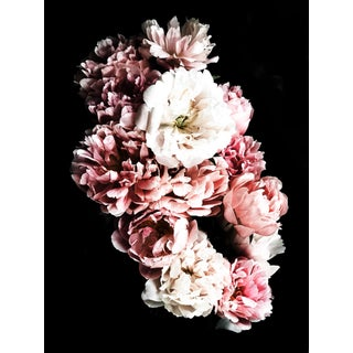 """Peony 105"" Photographic Print For Sale"