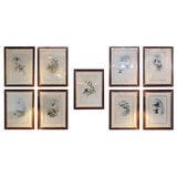 Image of Group of Nine John Gould 19 Century Copperplate Hand Engravings Framed & Matted For Sale