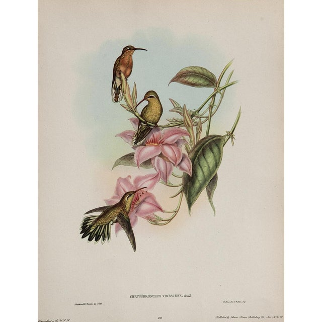 Hummingbird Lithograph by John Gould - Image 1 of 7