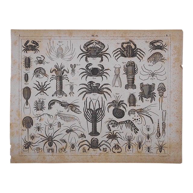 Antique Crustaceans Lithograph - Image 1 of 3