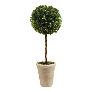 Boxwood Single Ball Topiary For Sale