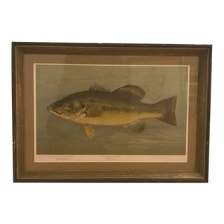 """Early 20th Century Antique """"The Fishes of North America That Are Captured on Hook and Line"""" William C. Harris Print For Sale"""