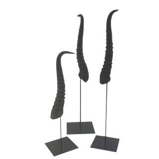 Black Springbok Horns - Set of 3 For Sale