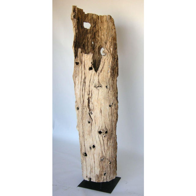 Large Driftwood Tree Trunk Sculpture For Sale In Los Angeles - Image 6 of 10