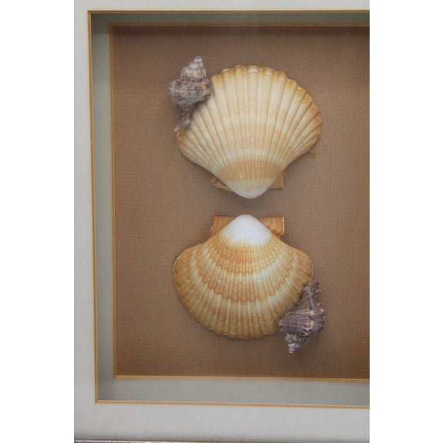 Very unique, organic seashell collage. Custom shadow box style frame with glass overlay. Peach colored silk background,...