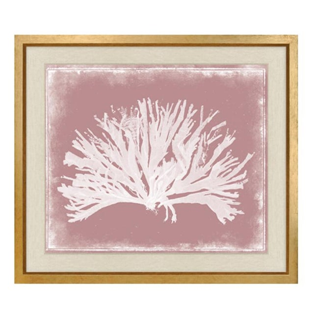 """Original Retail $3375 for the set or $1125 each, Framed Trowbridge """"Coloured Corals,"""" set of three by: Miranda Baker,..."""
