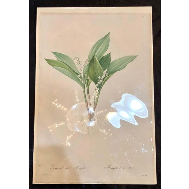 Light Green Convallaria Majalis Print Hand Colored Engraving Signed p.j. Redoute For Sale - Image 8 of 13
