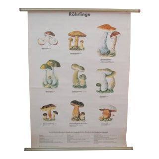 Germany School Chart of Mushrooms-Antique Poster