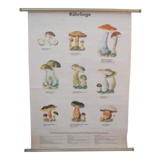 Vintage Mushrooms German School Chart -Antique Science Poster Botanical
