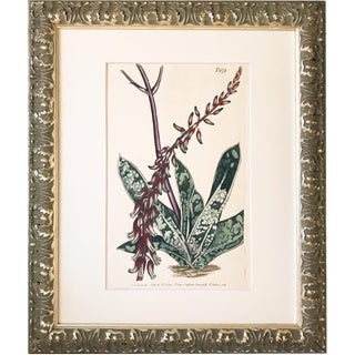 19th C. Thomas Curtis Hand Colored Botanical Engraving For Sale