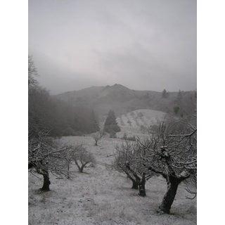 "Gaétan Caron ""Orchard in Snow"" Framed Mendocino Photograph, 2010 For Sale"