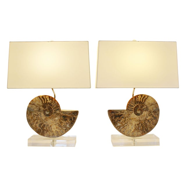 Ammonite Fossil Lamps - A Pair - Image 1 of 4