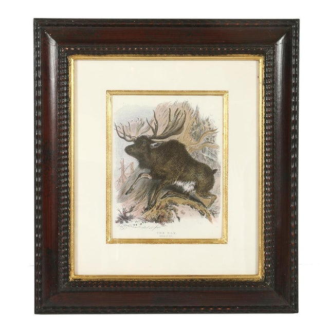 Traditional Set of Three Animal Prints in Mahogany Frames For Sale - Image 3 of 5