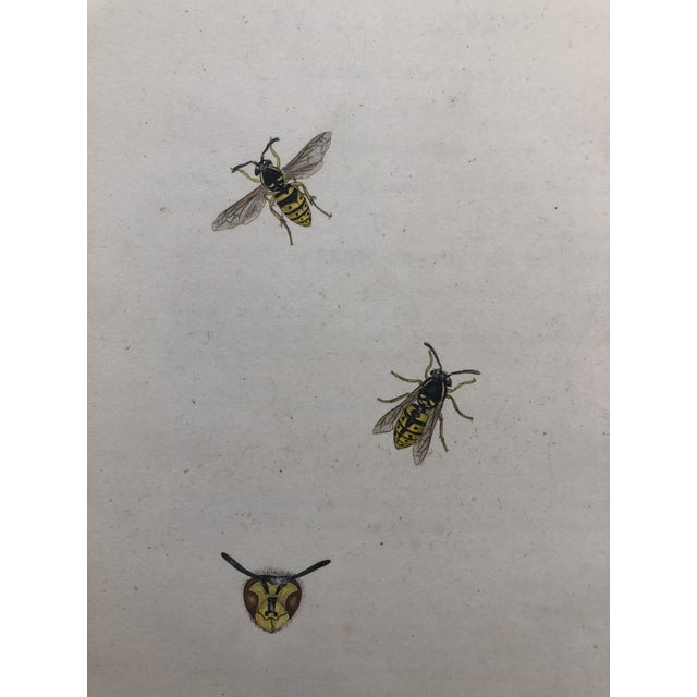 19th Century Insect Hand Colored Print For Sale