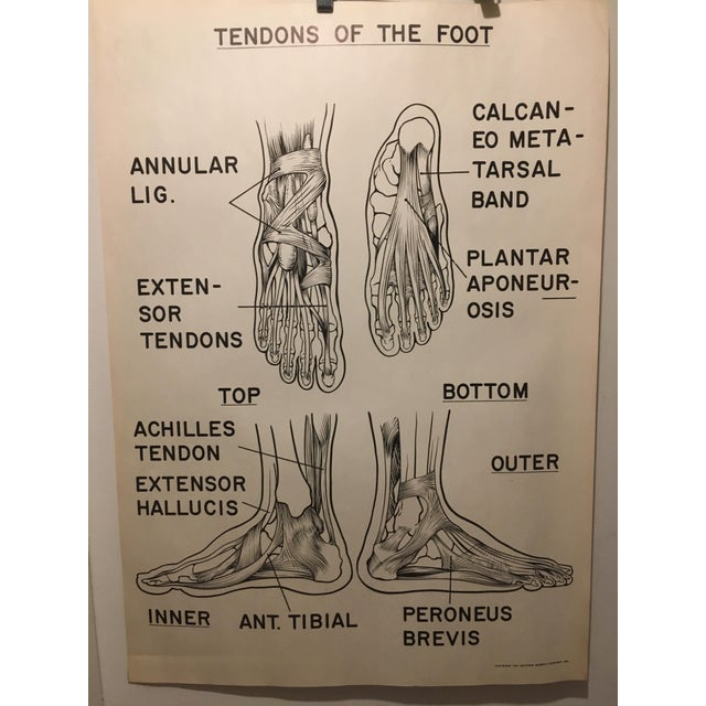 Industrial 1961 Vintage Tendons of the Foot Courtroom Anatomy Chart For Sale - Image 3 of 3