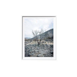 "Timothy Hogan ""Riverbed"" Original Framed Color Landscape Photograph, 2017 For Sale"