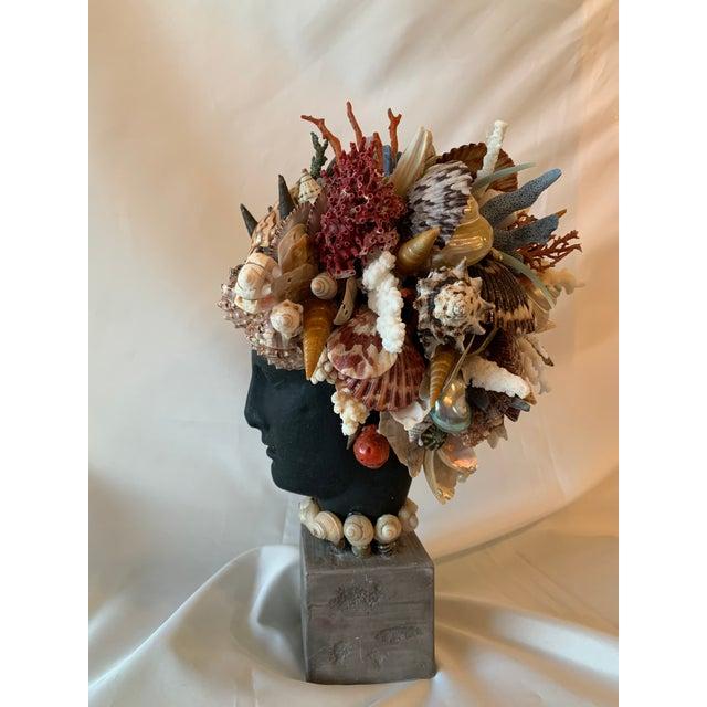 Christa's South Seashells Shell Hygiea Noire For Sale - Image 4 of 8