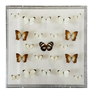 """""""White Within Sea & Earth"""" Butterfly Collection in Shadow Box by Briana Sophia For Sale"""