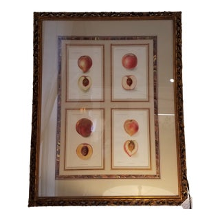 Vintage Peaches Framed Agriculture Pages For Sale