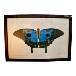 Framed Naturalist Moth Print, Blue & Black For Sale