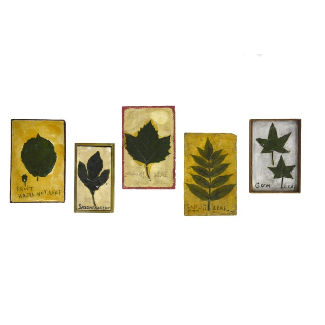 1930's Leaf Specimen Set - Image 1 of 5
