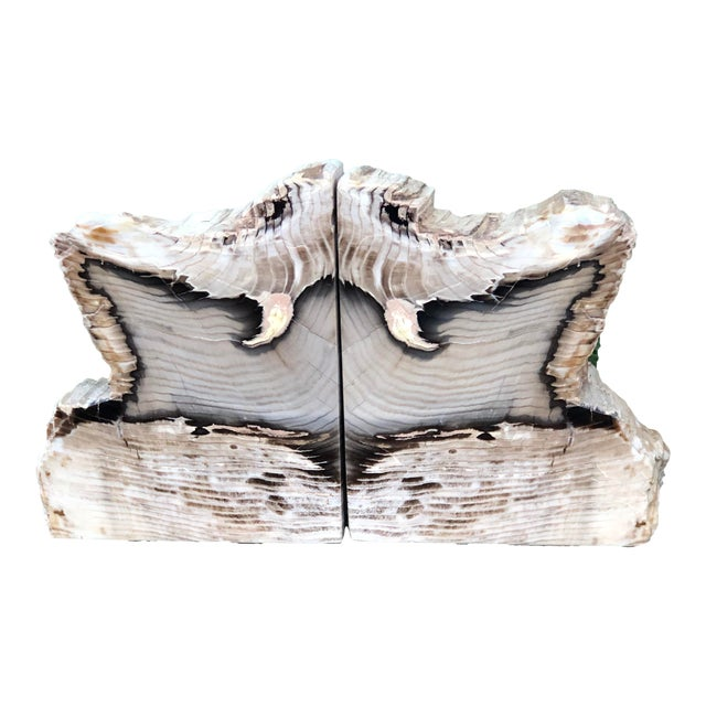 Fossilized Petrified Wood Bookends - a Pair For Sale