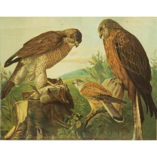 Paper German birds of prey school poster For Sale - Image 7 of 7