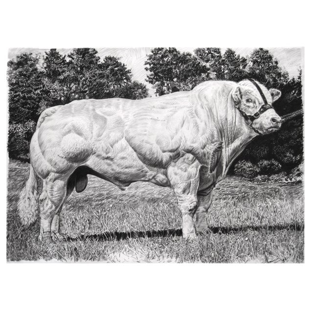 "Mid-Century Modern Contemporary ""Belgian Blue"" Rick Shaefer Charcoal Print For Sale - Image 3 of 3"